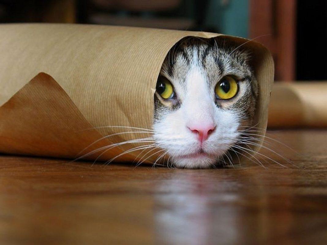 День селфи с котом